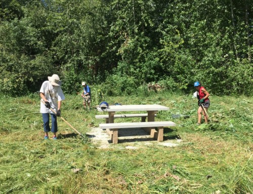 Old Ferry Landing Cleanup Work Bee July 23rd at 9:00AM