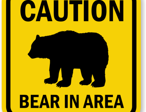 Bear Warning on South Summit Logging Road – July 2, 2018